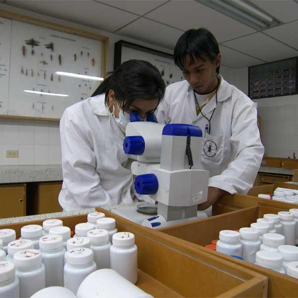 Entomologia Forense – L'Orologio della Morte