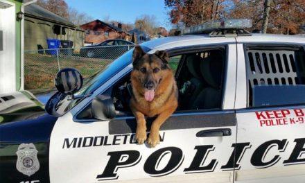 Come si diventa un Cane Poliziotto